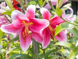 Regency Park flowers